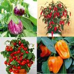VeVegetables for Patio or Balconys